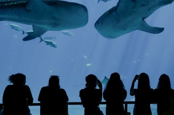Georgia Aquarium chooses for Inside Explorer Touch Table